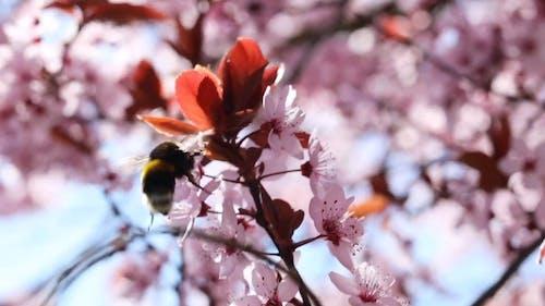 A Bee Feeding On Flowers Nectar