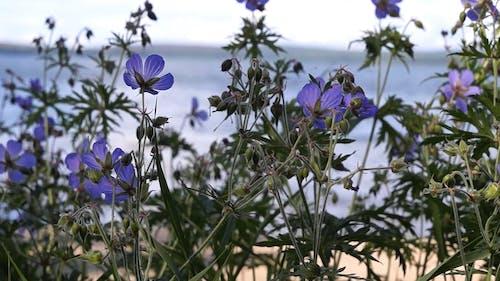Video Of Purple Flowers
