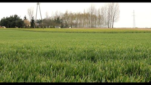 Video Of Green Field