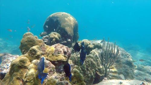 Fishes Swimming Near Underwater Corals