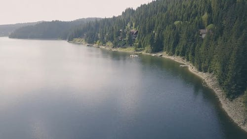 Drone Footage Of Forest Near Body Of Water