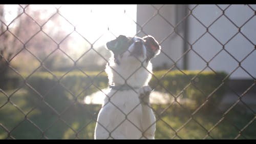 Video Of A Dog Behind A Fence