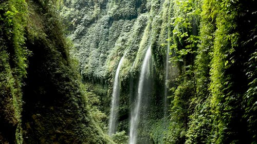 Waterfalls Cascading Through Vine Plants Covering The Cliffs
