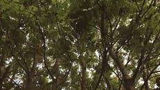 Video Of Tree Branches
