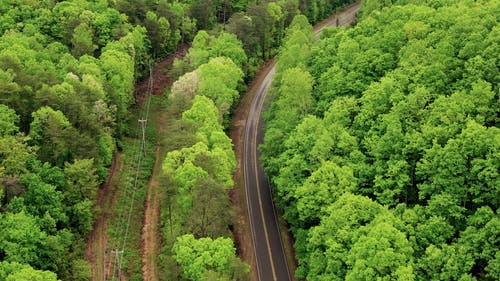 Drone Footage Of Road In Between Trees