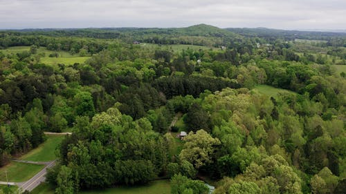 Drone Footage Of A Forest Community