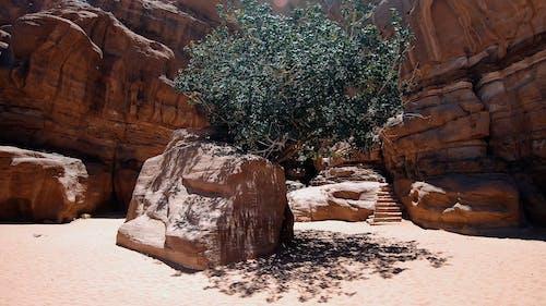 A Jordan Tree Growing Behind A Boulder Of Rocks