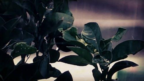 Plants Soaked Wet In Rain Water