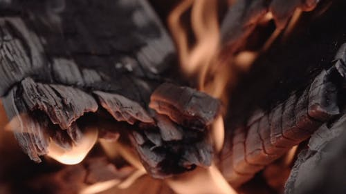 The Hot Flame Of A Burning Fire Woods
