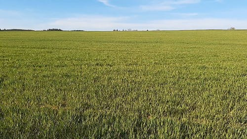 Summer Blue Sky Over a Green Field of Grass