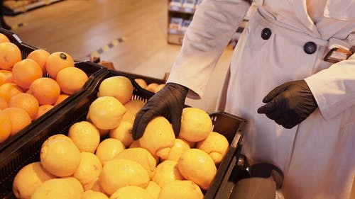 A Close-up Shot of a Person's Hands Picking Lemons
