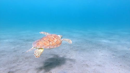 A Turtle Swimming Under The Sea