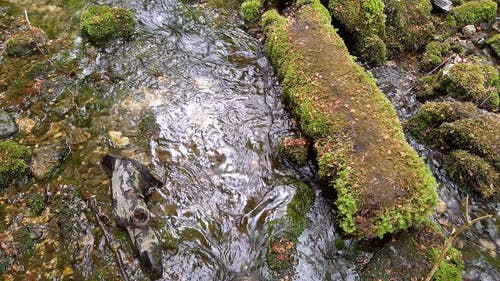 A Stream Water Flowing Through Mossy Rocks