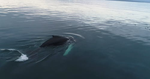 A Whale Swimming In The Ocean