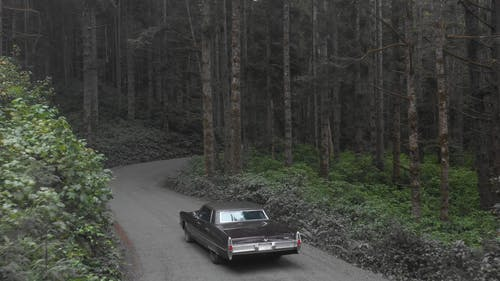 Vintage Car Travelling In The Woods