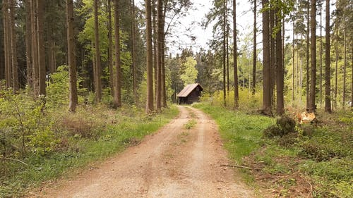 An Off Road Leading To A Forest Cabin