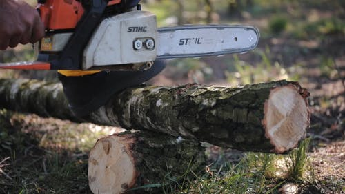 Cutting Tree Trunk For Fire Woods