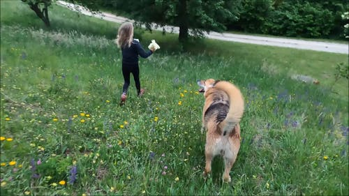 Girl and Dog Running in Grass Field
