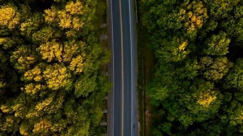 Drone Shot of a Roadway in the Middle of the Forest