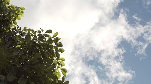 Wind Blowing Green Tree Leaves