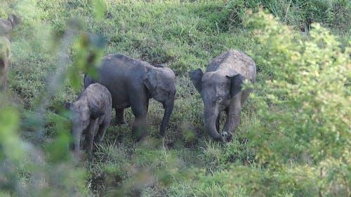 Elephants on Grass Field
