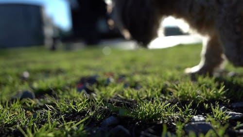 Shallow Focus of a Grass