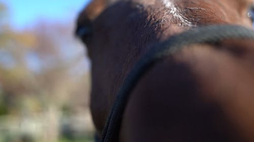 Close-Up View of a Brown Horse