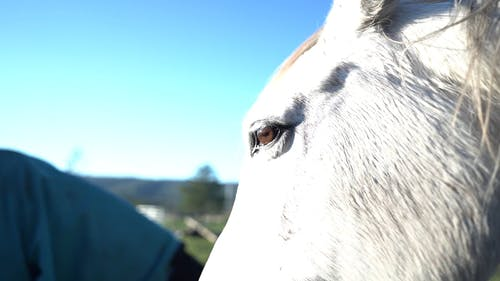 Close-Up View of White Horse's Eye