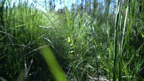 Close-Up View of Wild Grasses