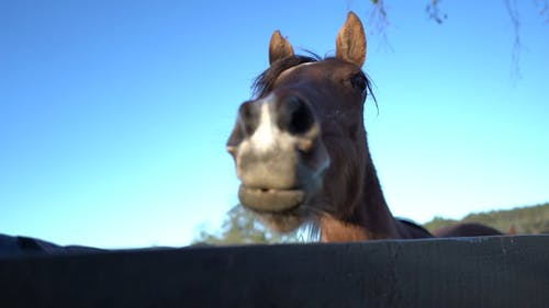 Close-Up View of Brown Horse