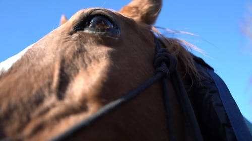Close-Up View of Brown Horse's Head