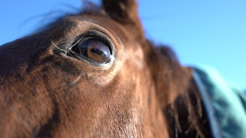 Close-Up View of a Brown Horse's Head
