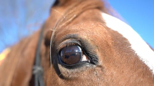 An Extreme Close up of a Horse