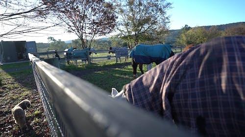 Livestock Horses on Pastoral Land