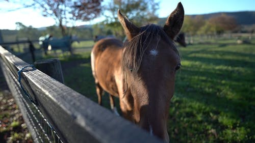 Close-up Video of Brown Horse