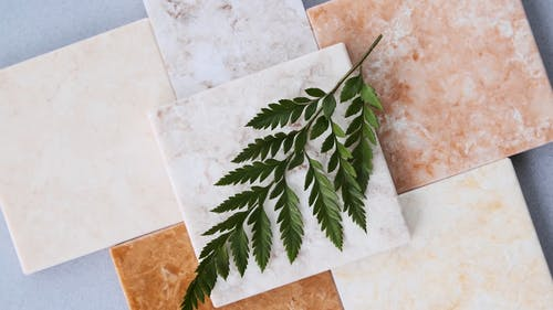 A Plant Leaf Lying On Ceramic Tiles