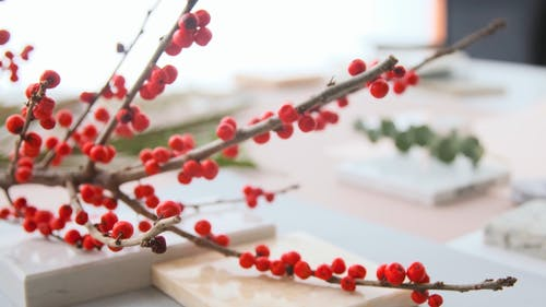 Red Currant Branch on Top of a Tile
