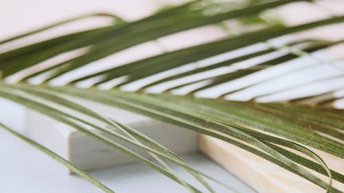 Green Palm Leave
