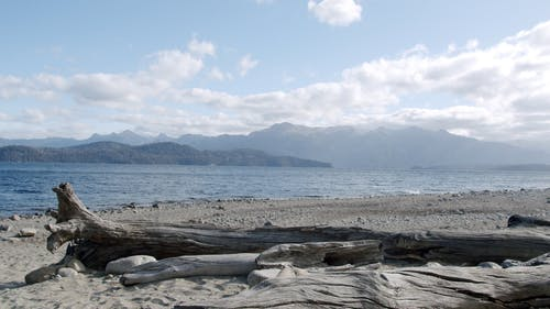 Person Sitting on the Wood Log on The Shore