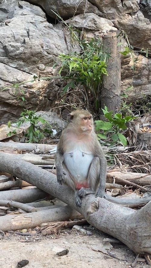 Monkey Sitting on the Log