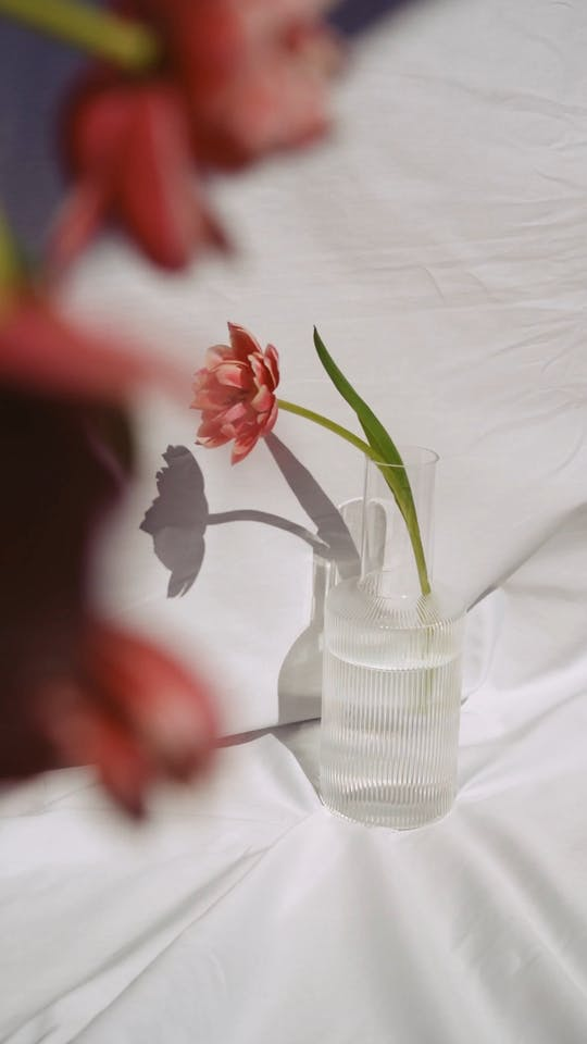 Pink Flower On Clear Glass