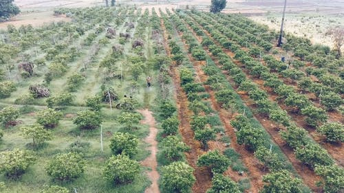 Aerial Footage of a Field Of Trees