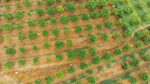 Aerial Footage of an Open Field