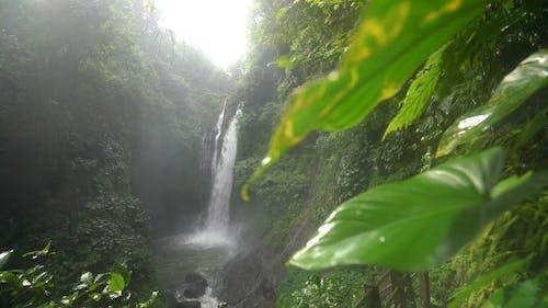 Green Plants Near Waterfalls