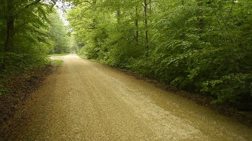 An Off-road Cutting Through Forest Land