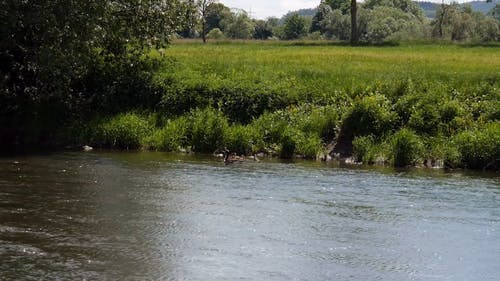 Ducks Swimming On The Riverside