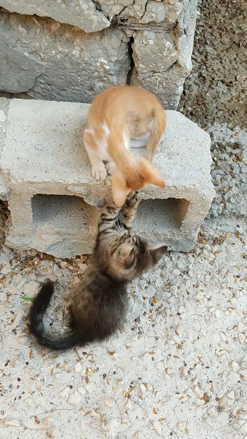 Two Kittens Playing Near A Hollow Block