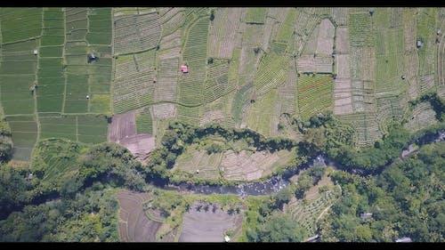 Bird's Eye View Footage Of Cropland