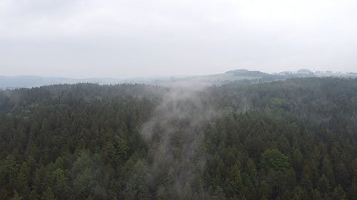 Aerial View Of Trees On A Foggy Day
