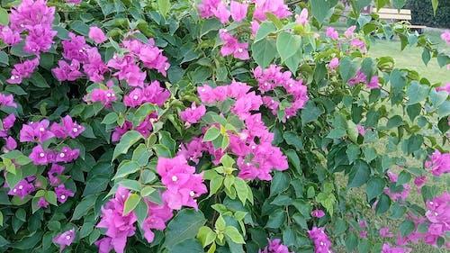 Close-Up Video Of Purple Flowers